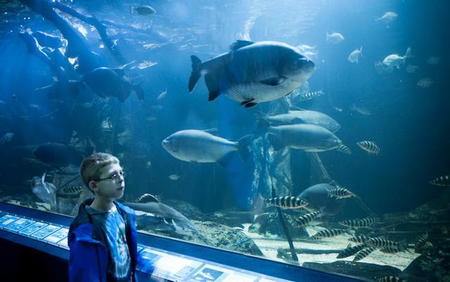 Exploring At Newport Aquarium On